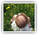 Improvements in Developmental Delay, Colic and GERD in a Child Undergoing Chiropractic